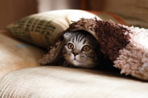 4 Ways Introverts and Cats Are Exactly the Same