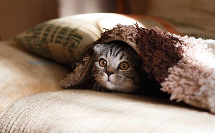 IntrovertDear.com introverts cats