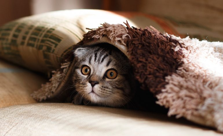 how introverts are like cats