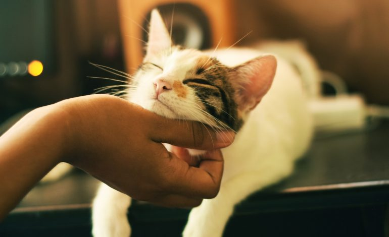 a cat getting his chin scratched by an introvert