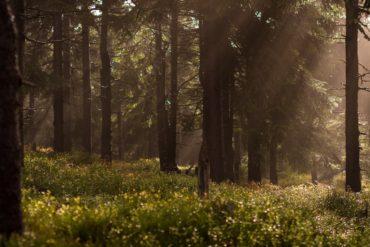 a nature scene